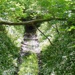 Radexkursion in den Leipziger Auwald